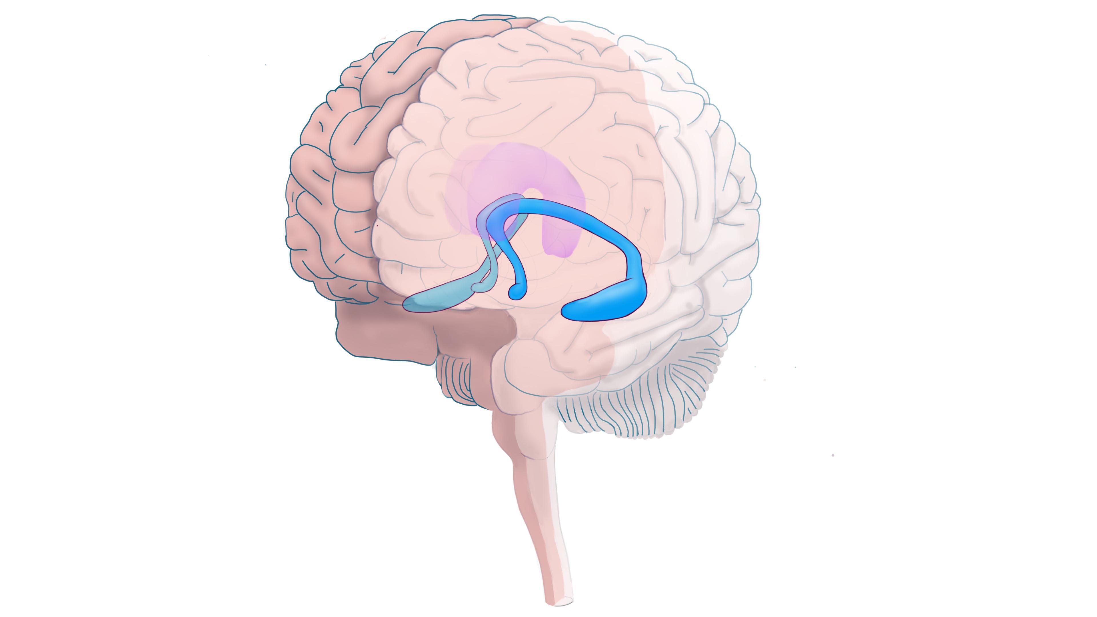 Как гиппокамп связан с нашей эпизодической памятью