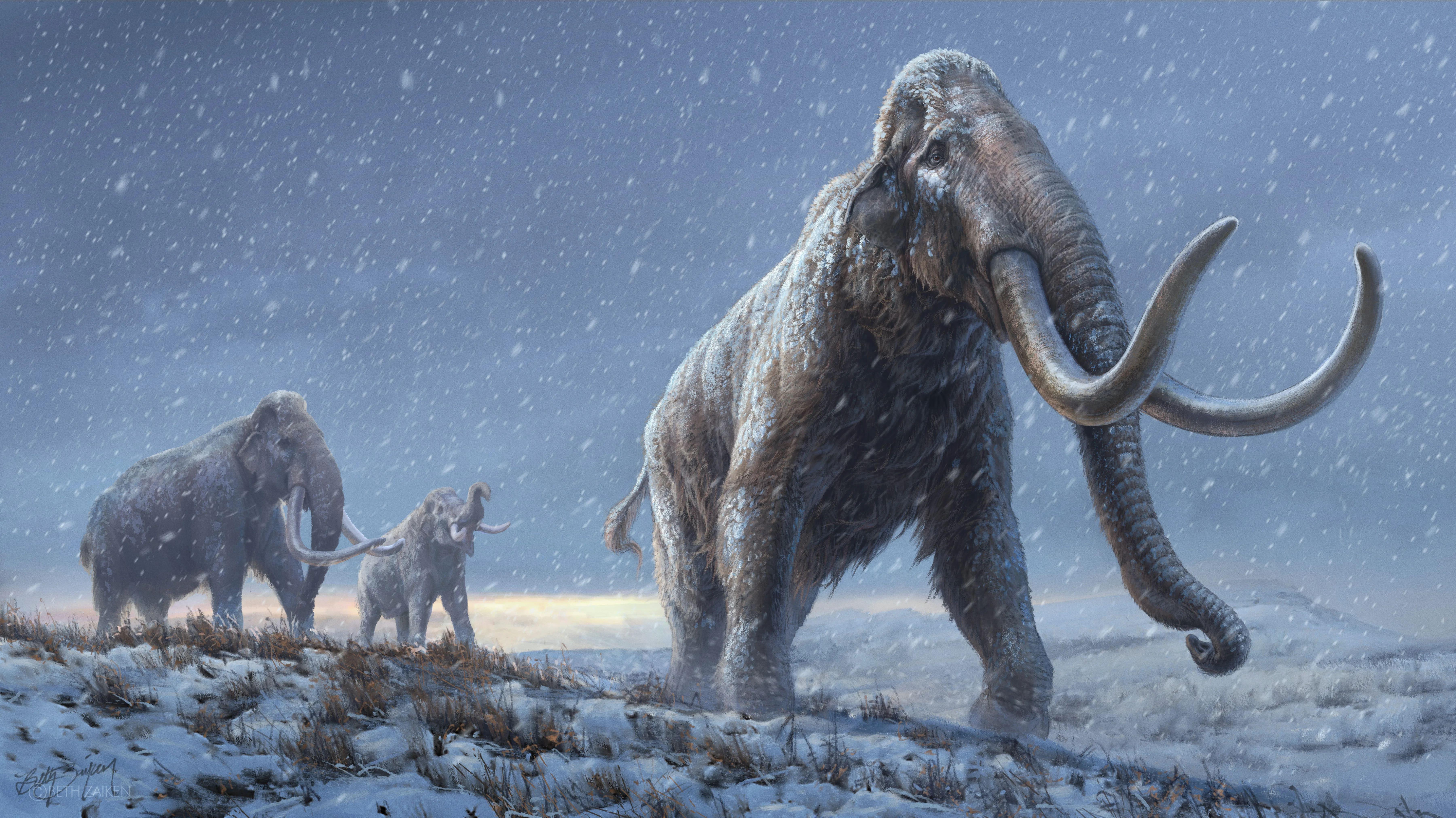 В древней ДНК нашли нового мамонта