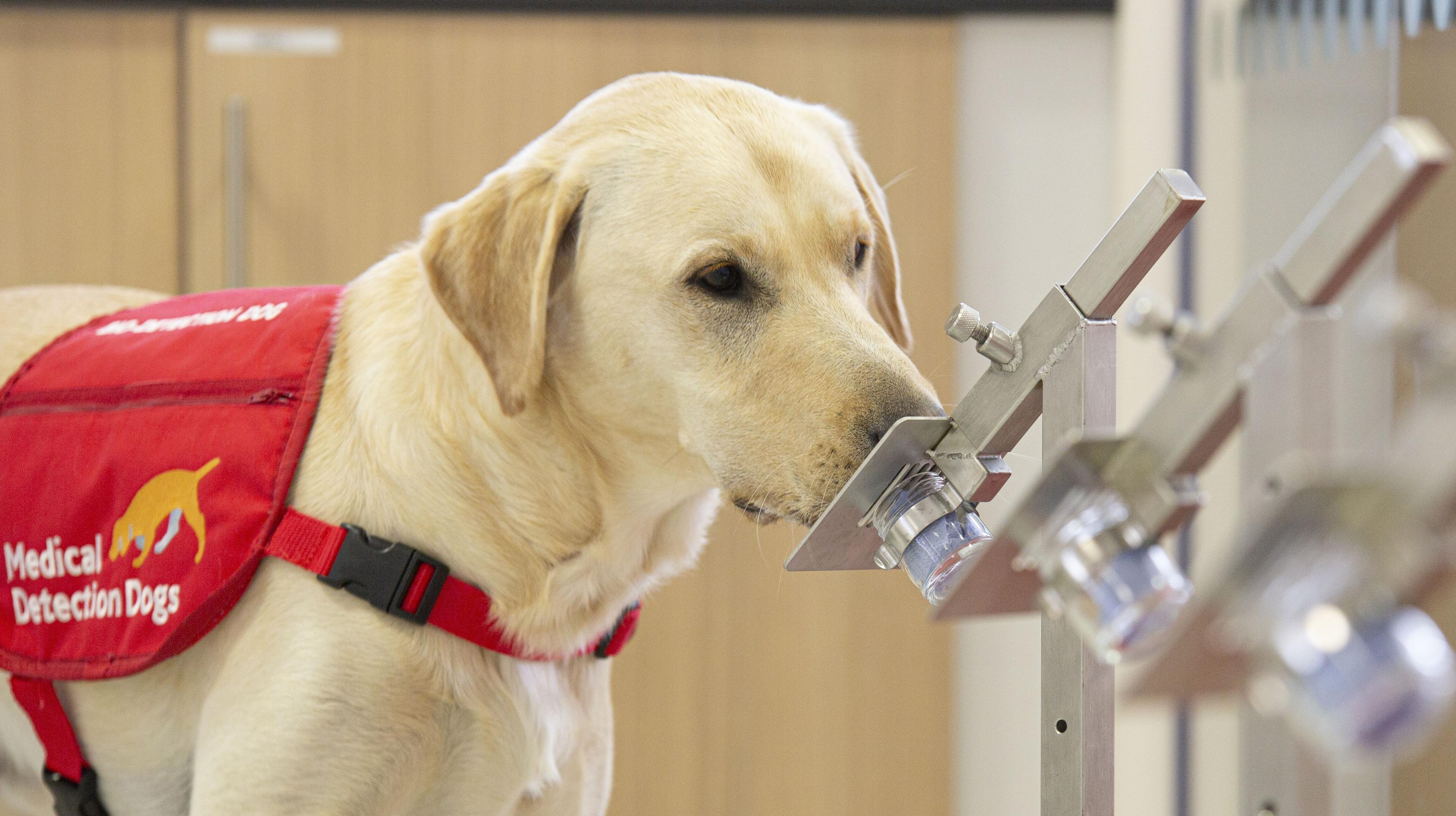 «Электронный нос» смог диагностировать рак не хуже обученных собак