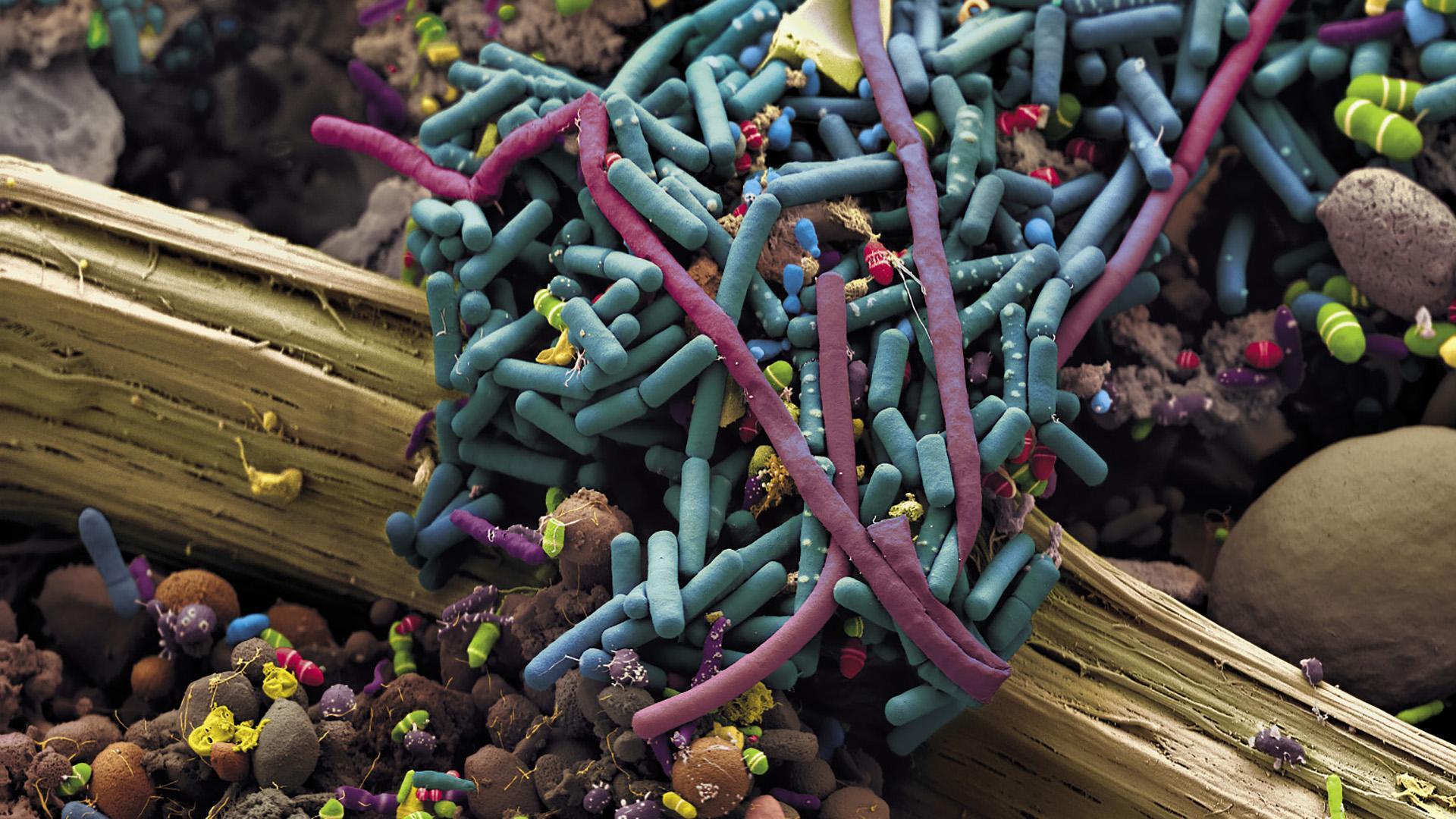 Пересадка фекальной микробиоты помогла в лечении меланомы