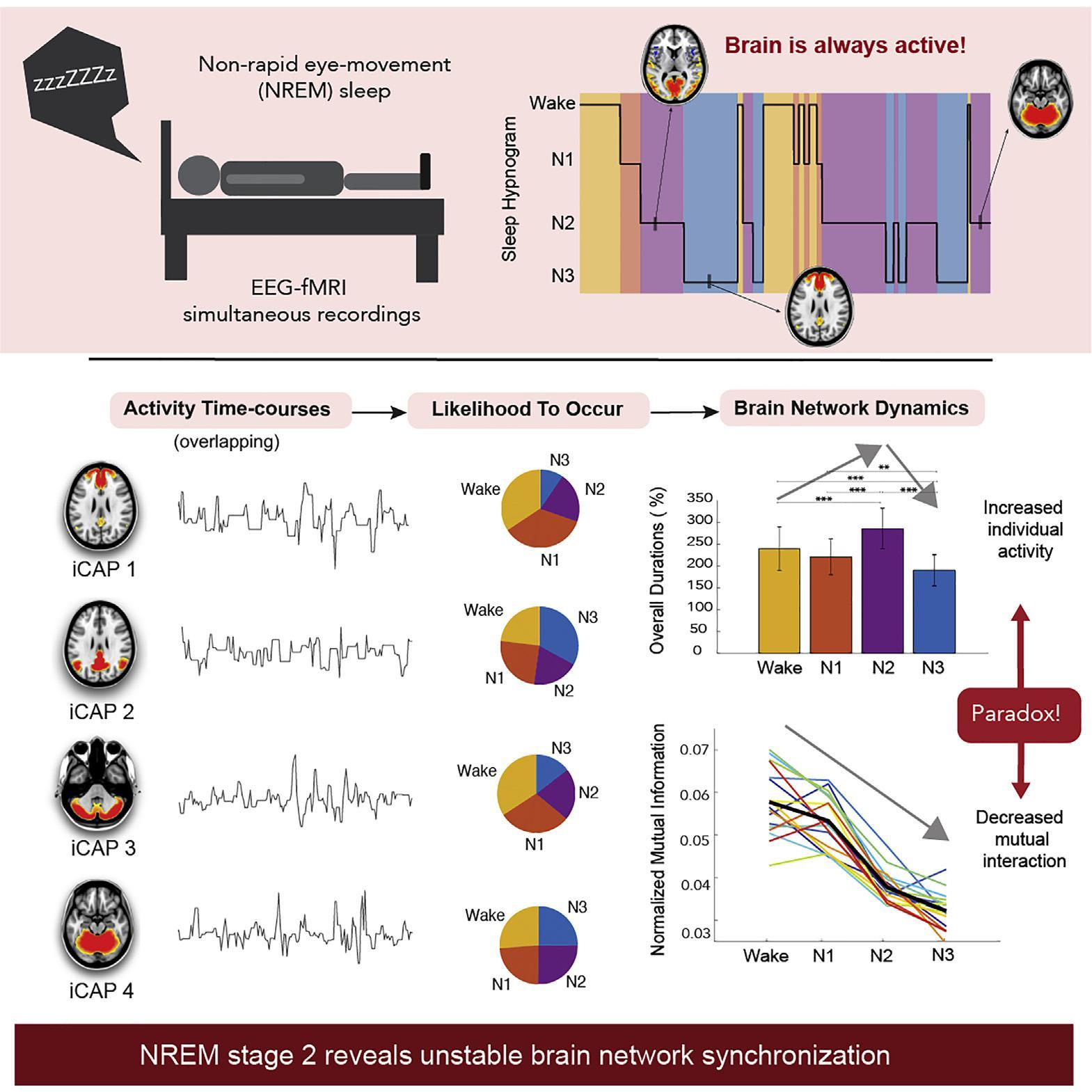 Мозг во время сна: активность выше, сознание ниже