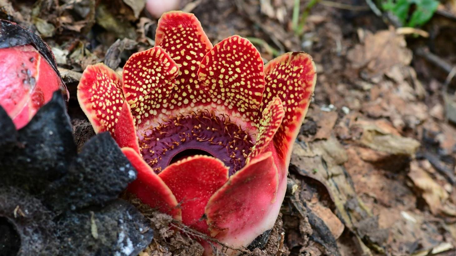 Паразитические растения растеряли почти половину генов