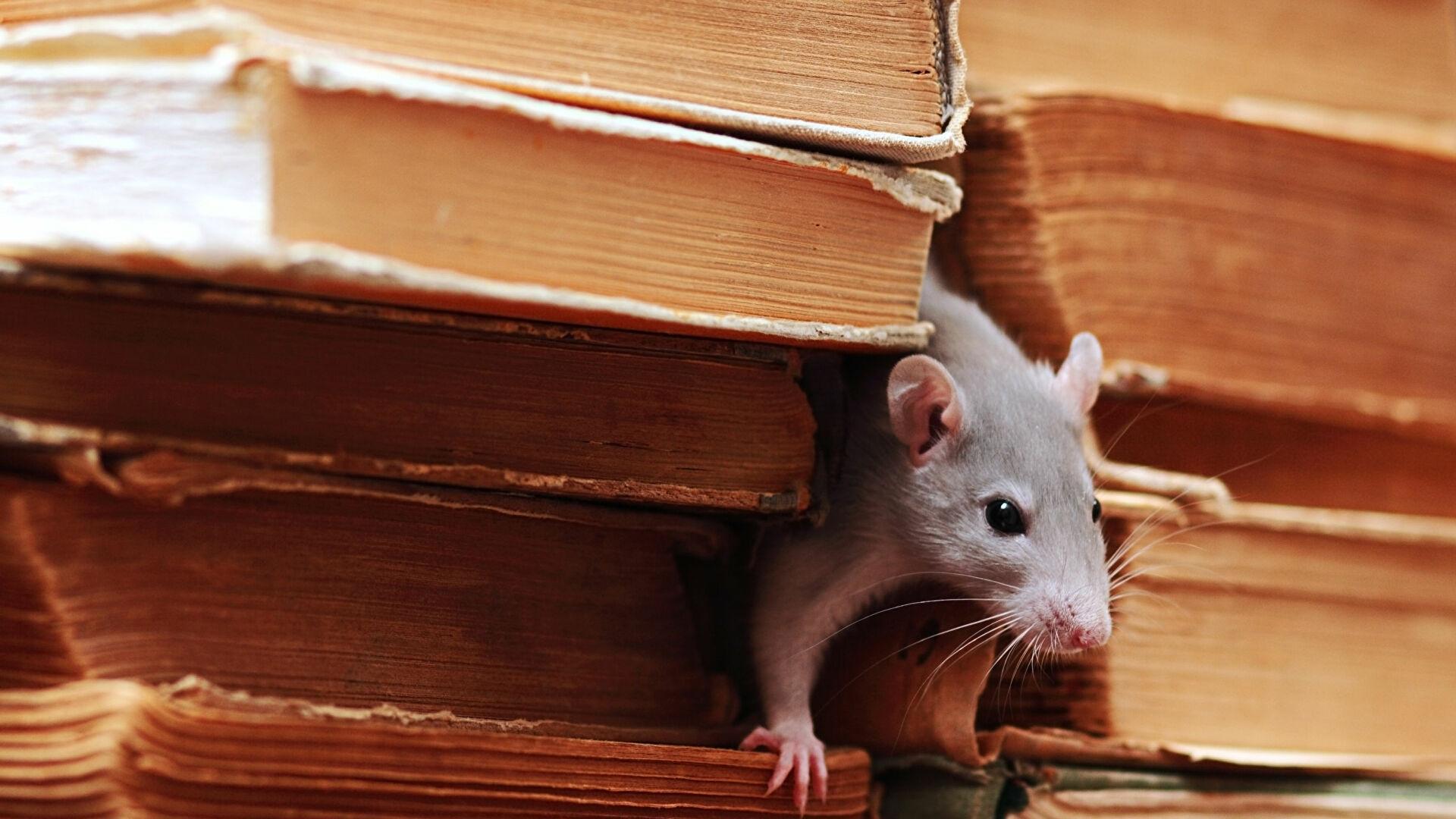 Долгое соседство с человеком сделало мышей сообразительнее