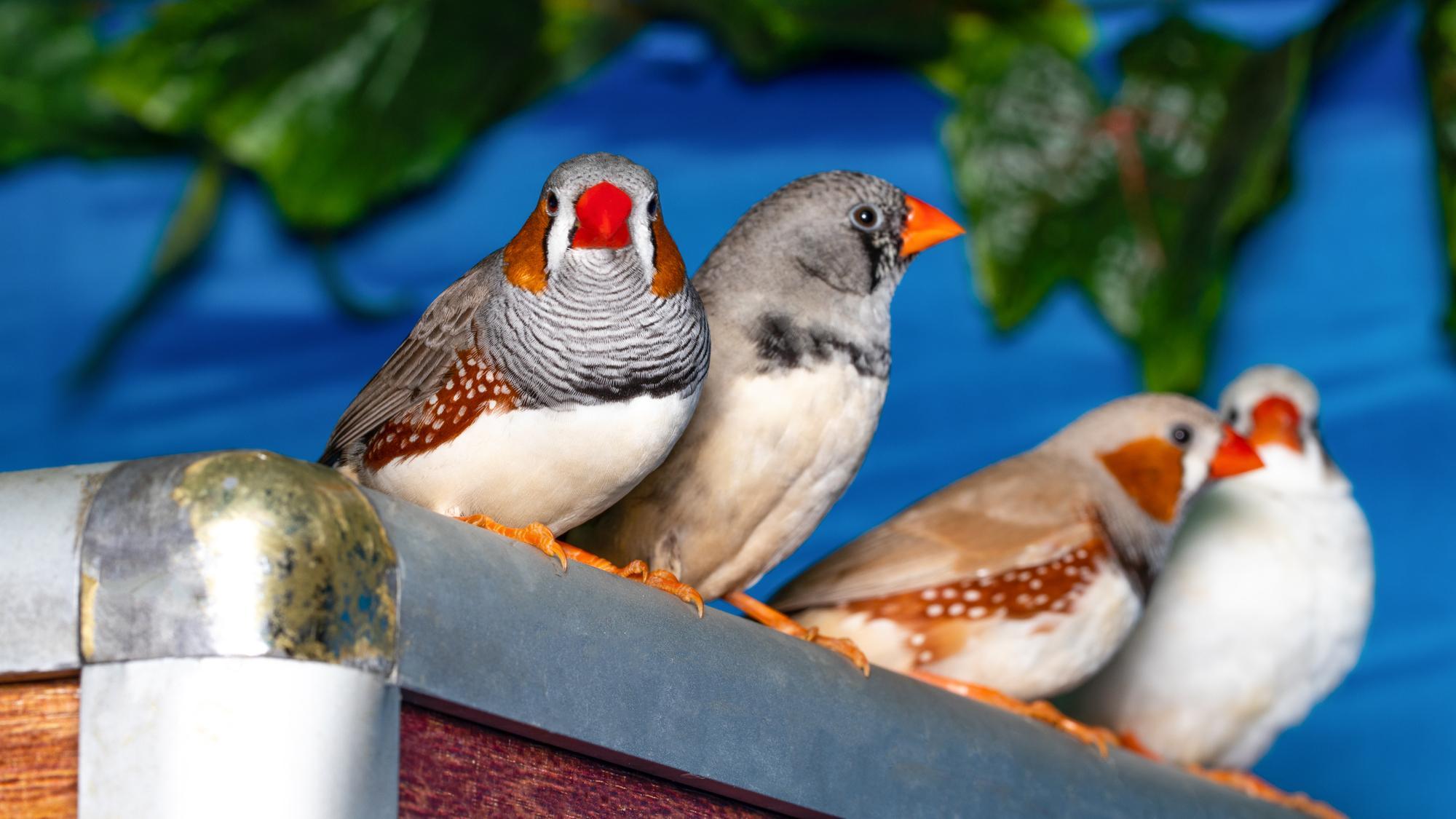 Певчие птицы глупеют от дорожного шума