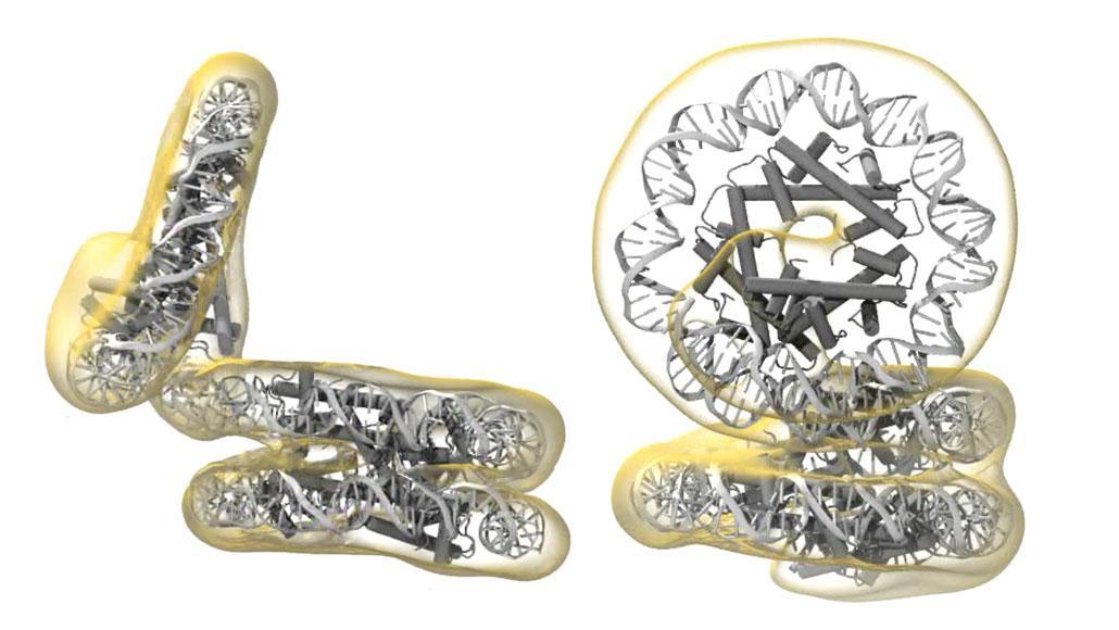 Упаковку ДНК у архей сравнили с детской пружиной-«слинки»