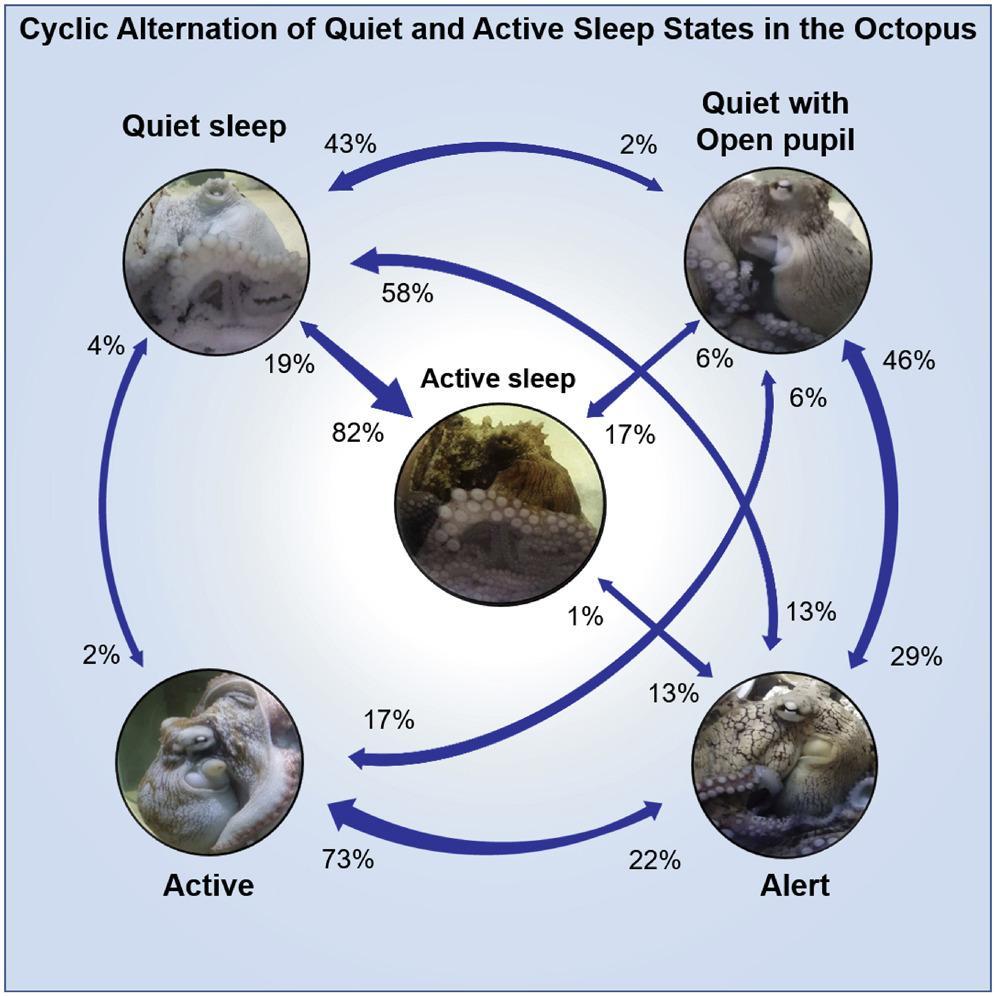 Осьминоги способны менять цвет, когда спят. Оказалось, это происходит из-за снов