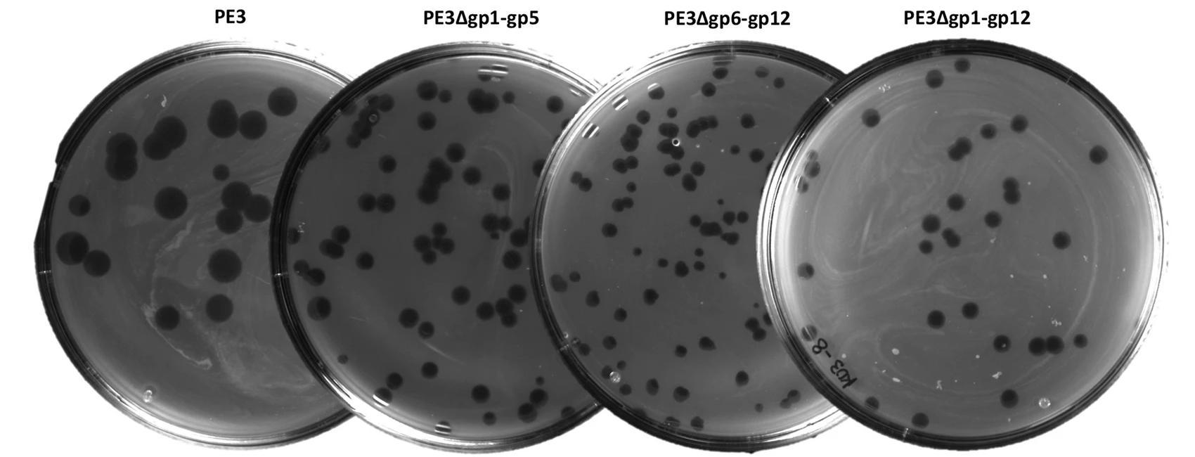 Созданы первые синтетические бактериофаги