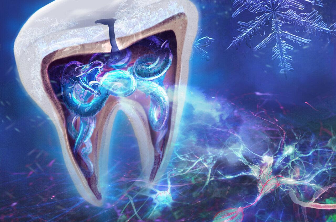 Ионный канал TRPC5 заставил зубы болеть от холода