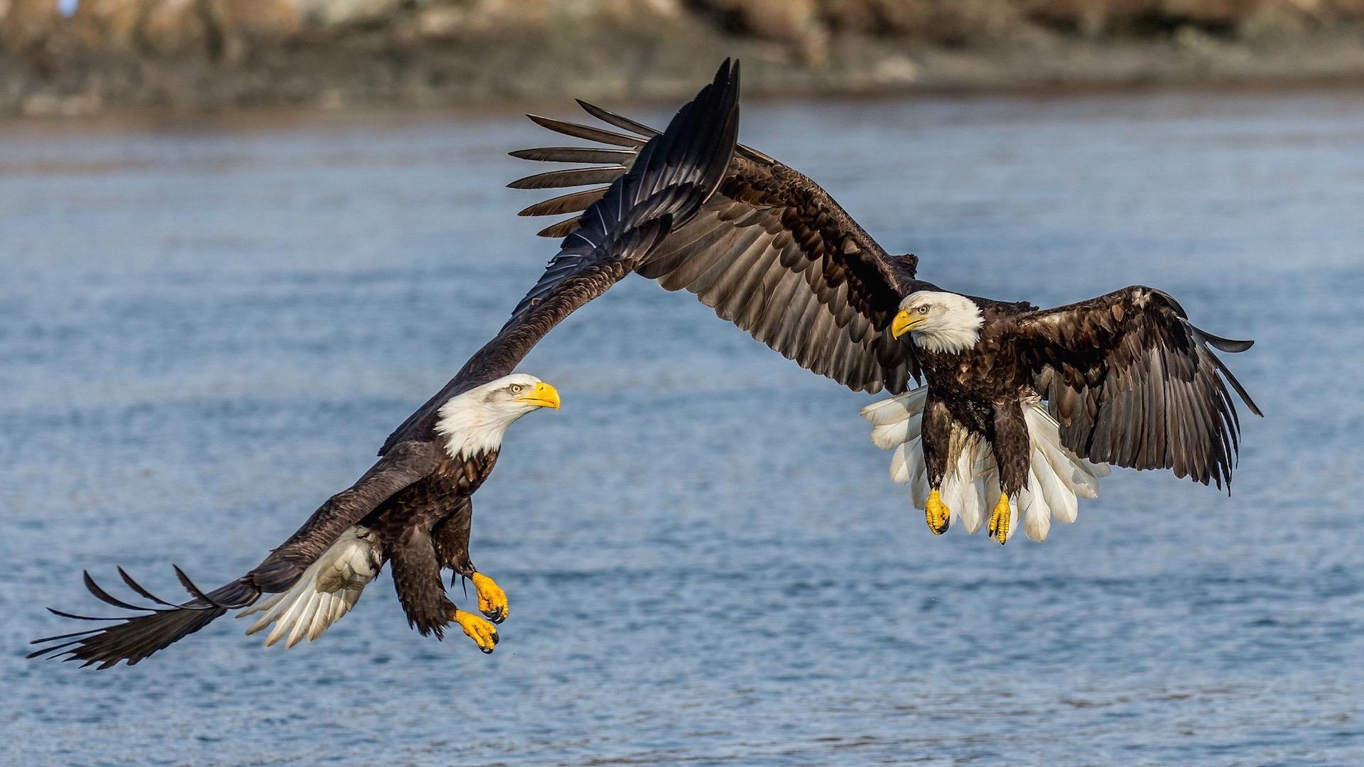 Смерть от воды. Биологи четверть века искали убийцу орланов в Арканзасе — и, наконец, нашли