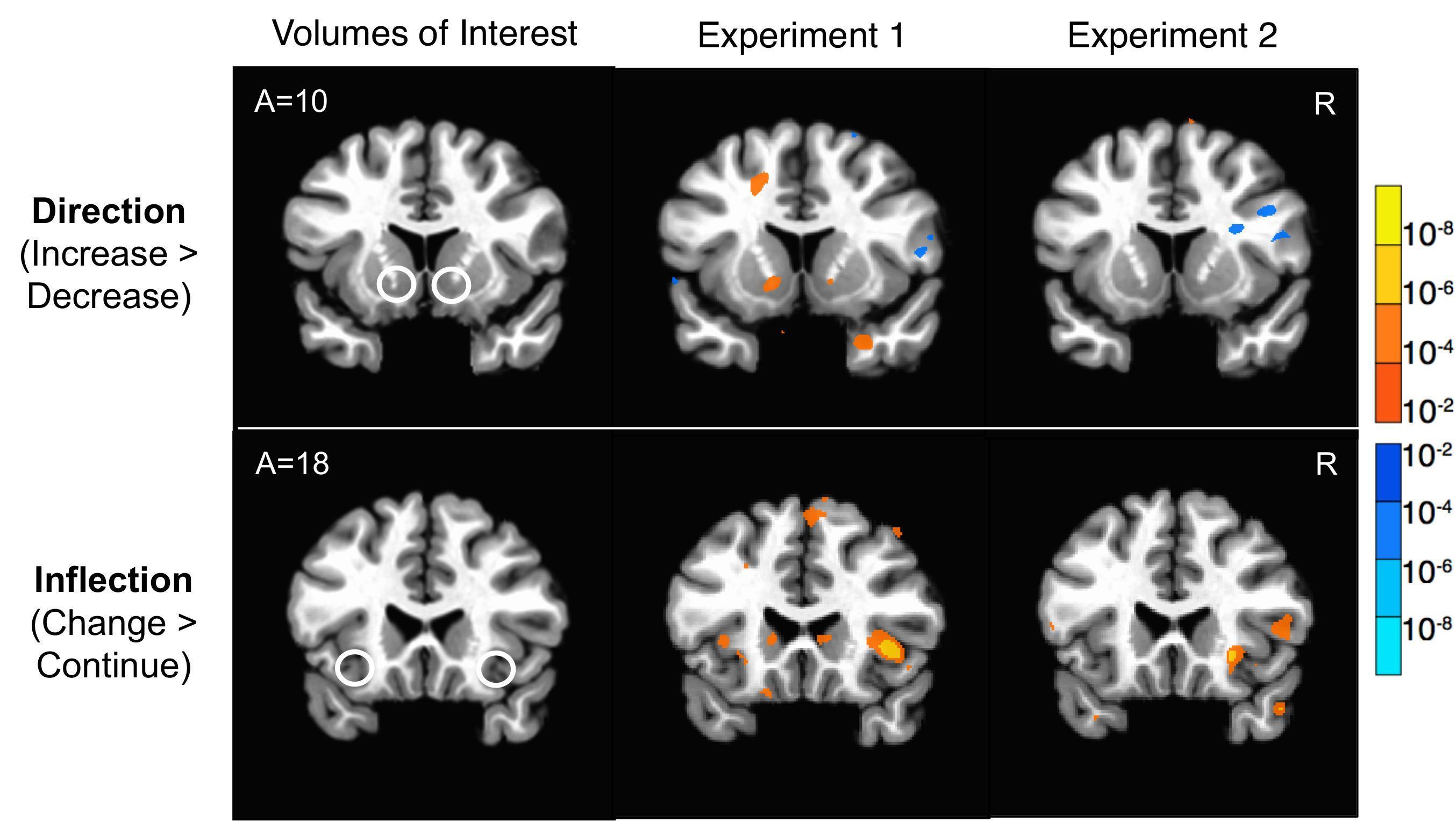Активность мозга трейдеров предсказала изменения котировок лучше, чем их действия