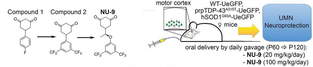 Новое соединение остановит повреждение нейронов при БАС