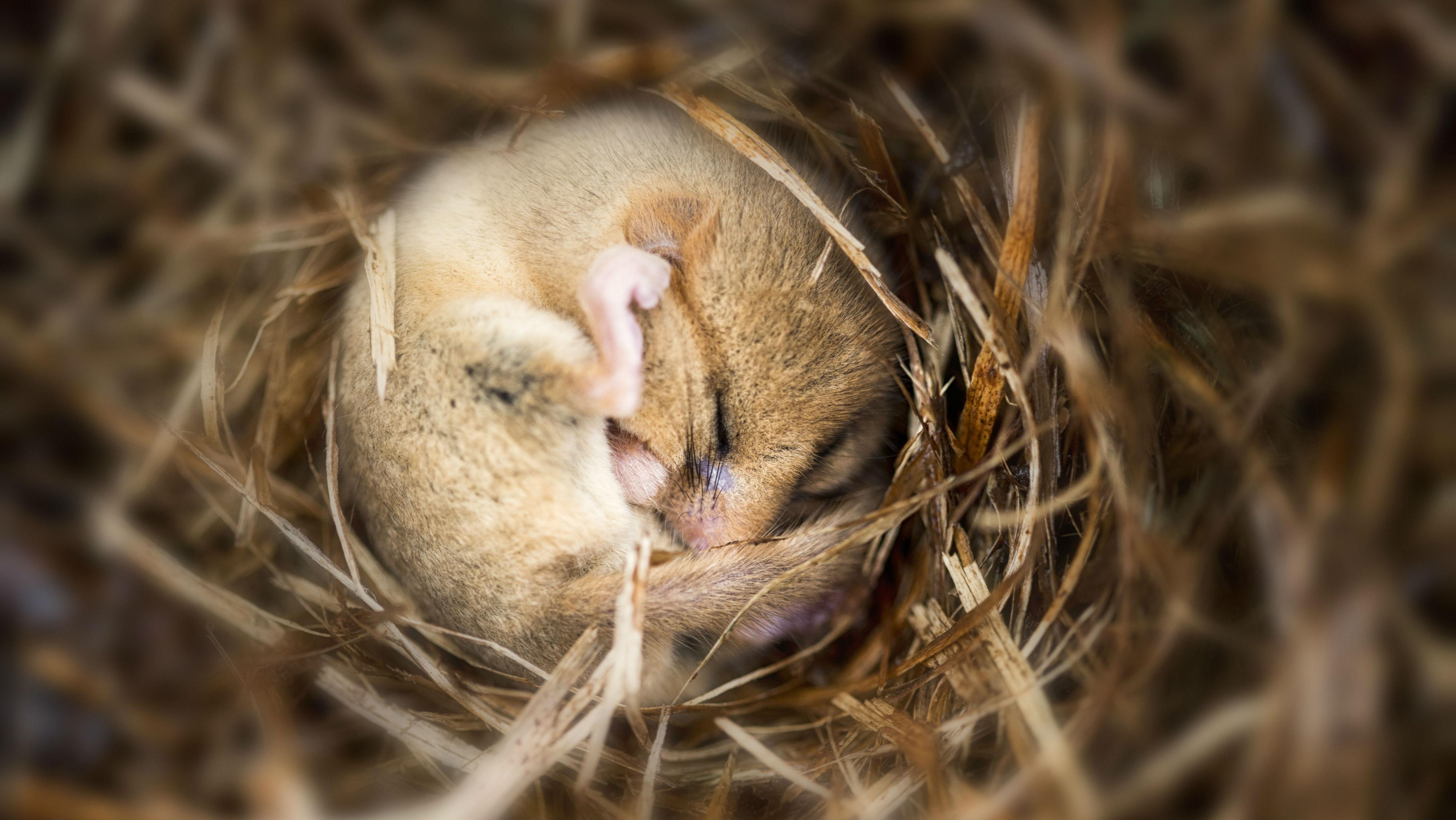Астроциты — повелители медленного сна
