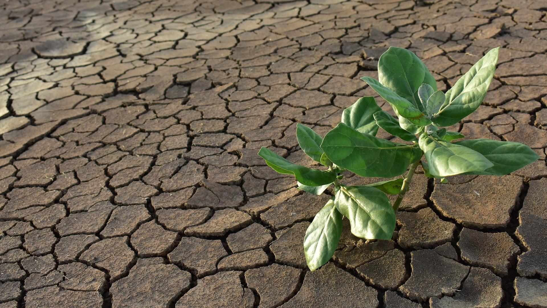 Найден новый способ, при помощи которого растения экономят воду