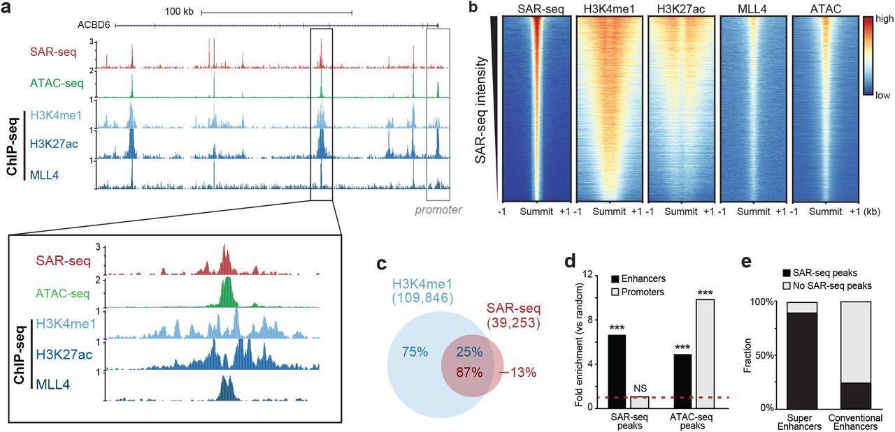 После деления в нейронах оказалось много одноцепочечных разрывов ДНК
