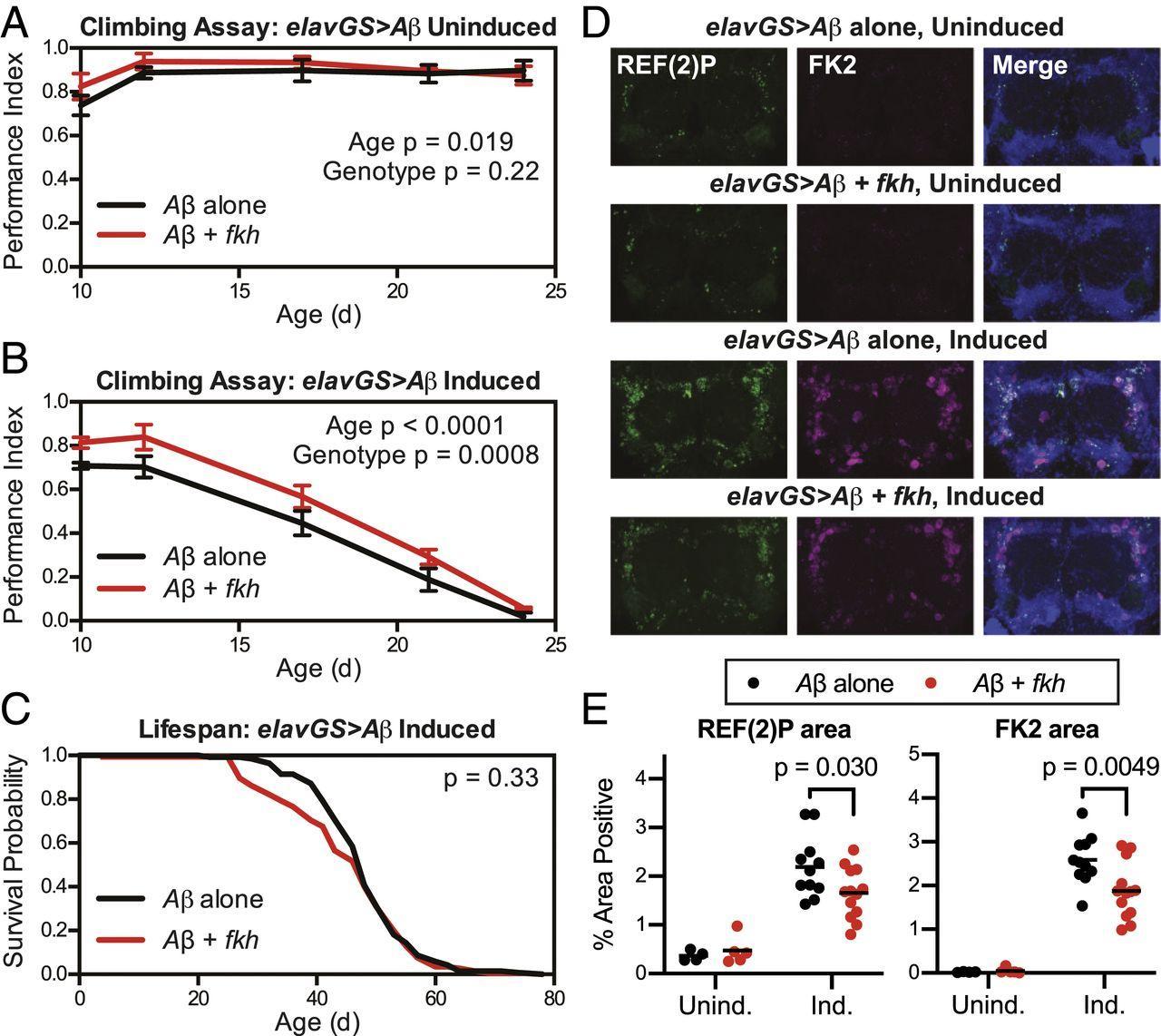 Может ли клетка жить дольше?