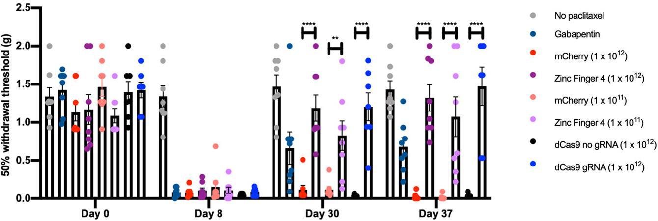 Генная терапия облегчила боль у мышей