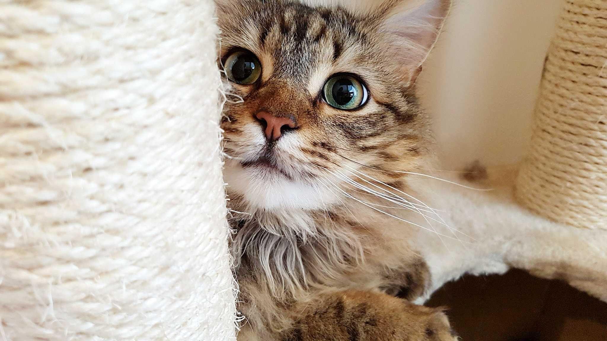 Кошки не отреагировали на помощь незнакомцев своим хозяевам