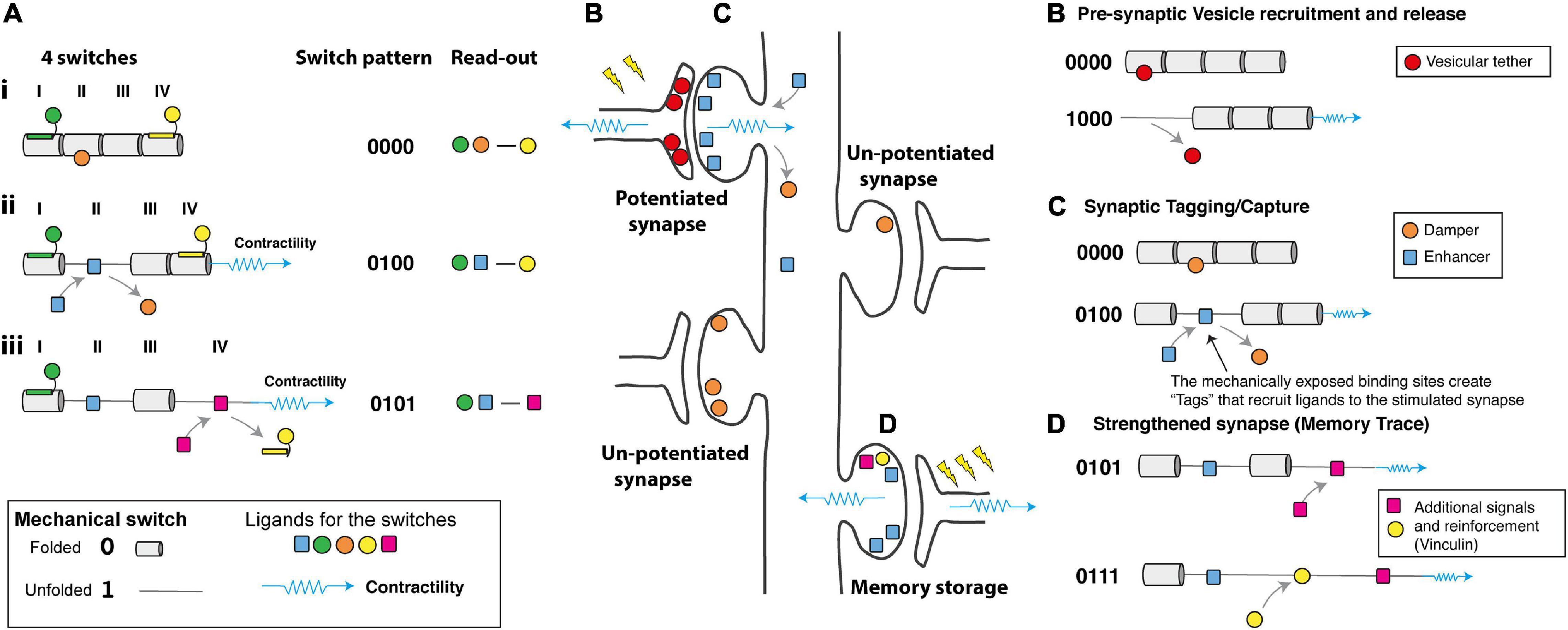 Новая теория памяти – прорыв или утопия?