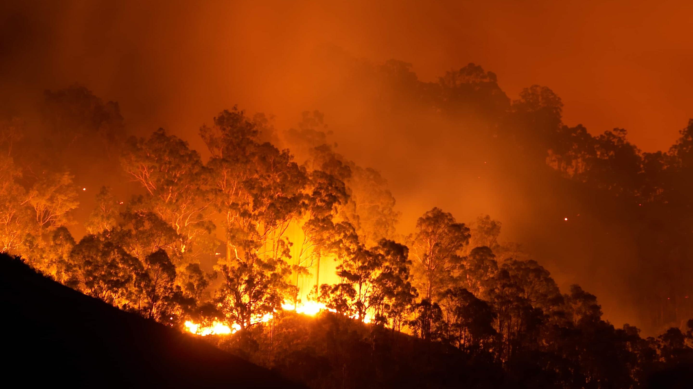 Ежегодные лесные пожары снижают способность лесов накапливать углерод