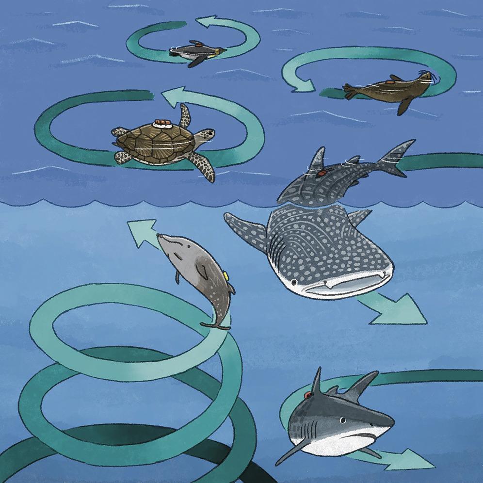 Черепахи, акулы и пингвины плавают кругами. Ученые не понимают, почему это происходит