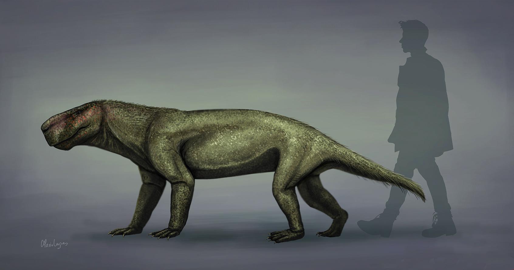 Палеонтологи предположили, что гипотеза о способе передвижения предков млекопитающих неверна