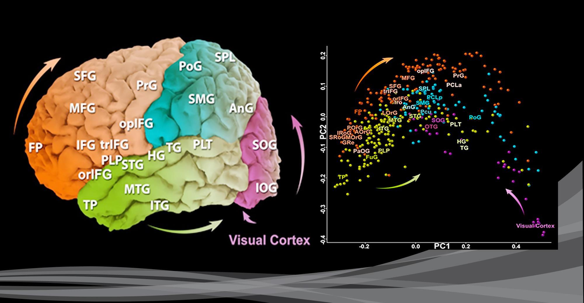 Магнитные импульсы помогли создать карты активности мышц для диагностики двигательных нарушений