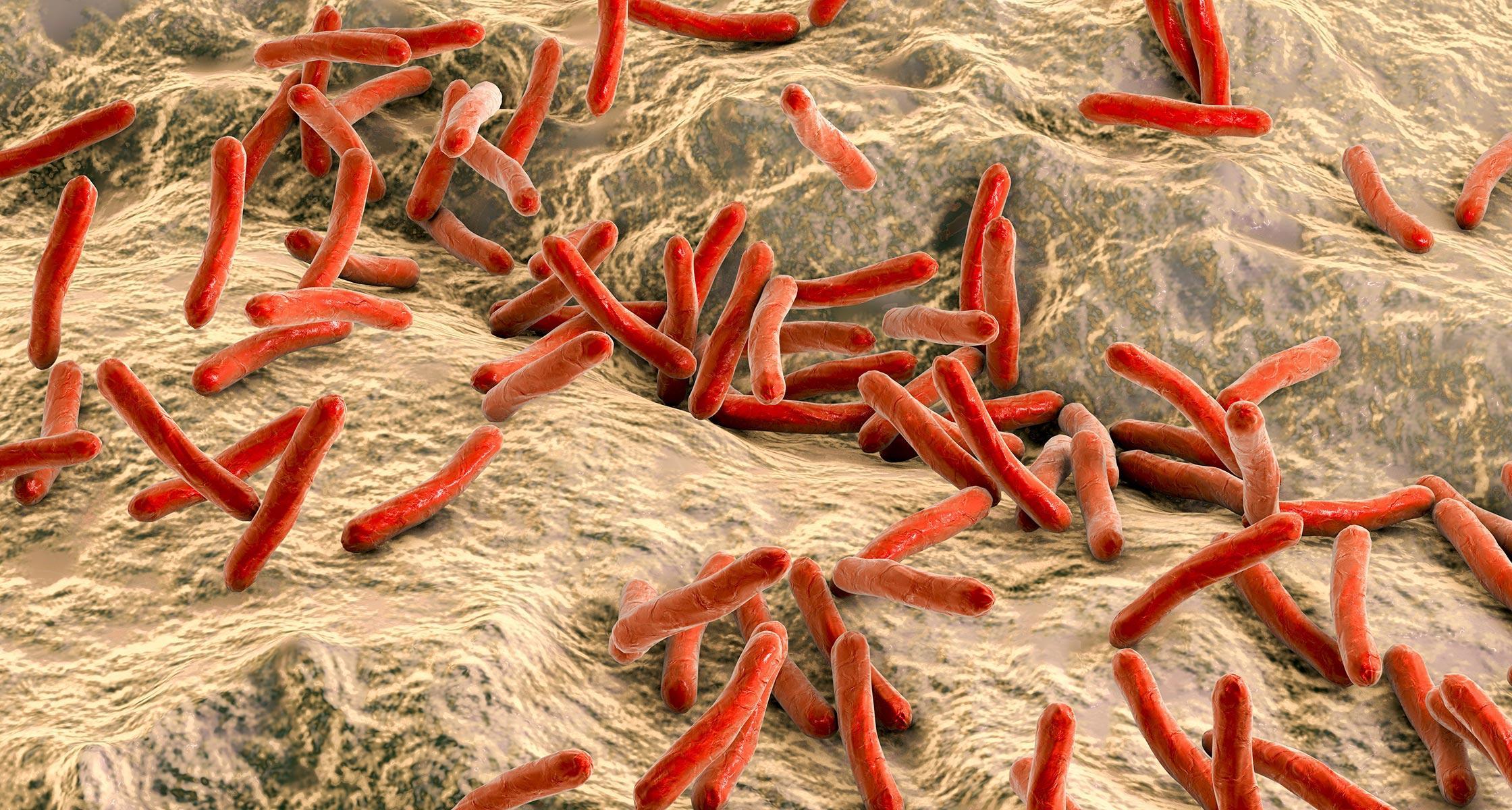 Генетики выяснили, как туберкулез сформировал иммунную систему человека