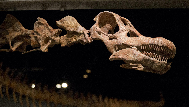 «Ниндзя-гигант» из Аргентины оказался самым древним представителем рода титанозавров