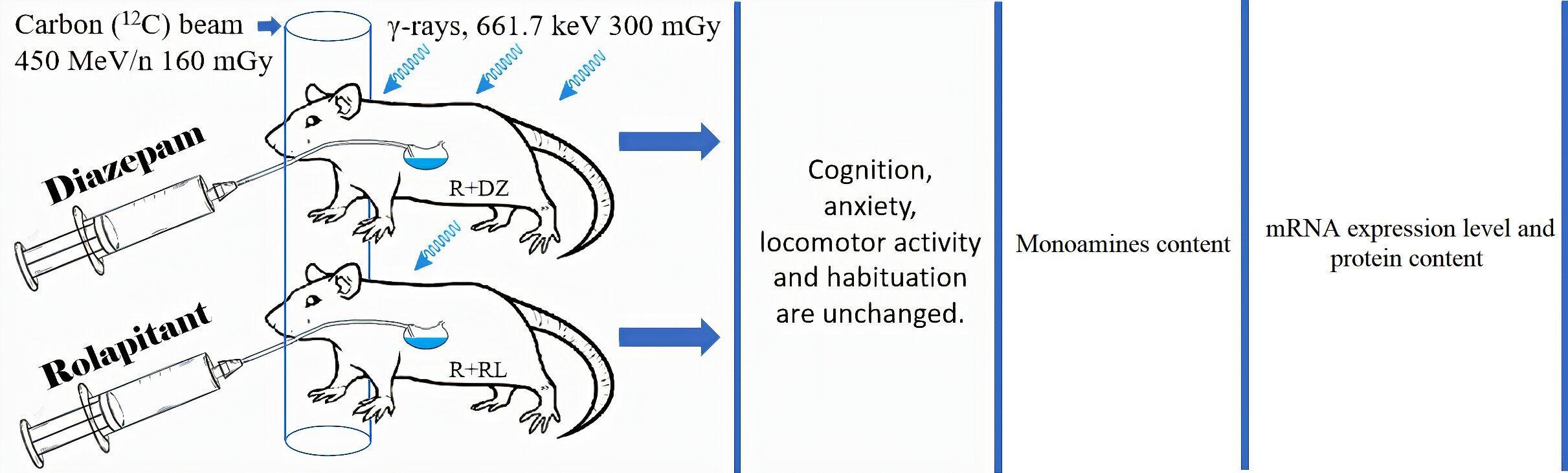 Ролапитант защитил мозг от ионизирующего излучения