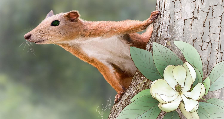 Ученые нашли останки древнейших приматов