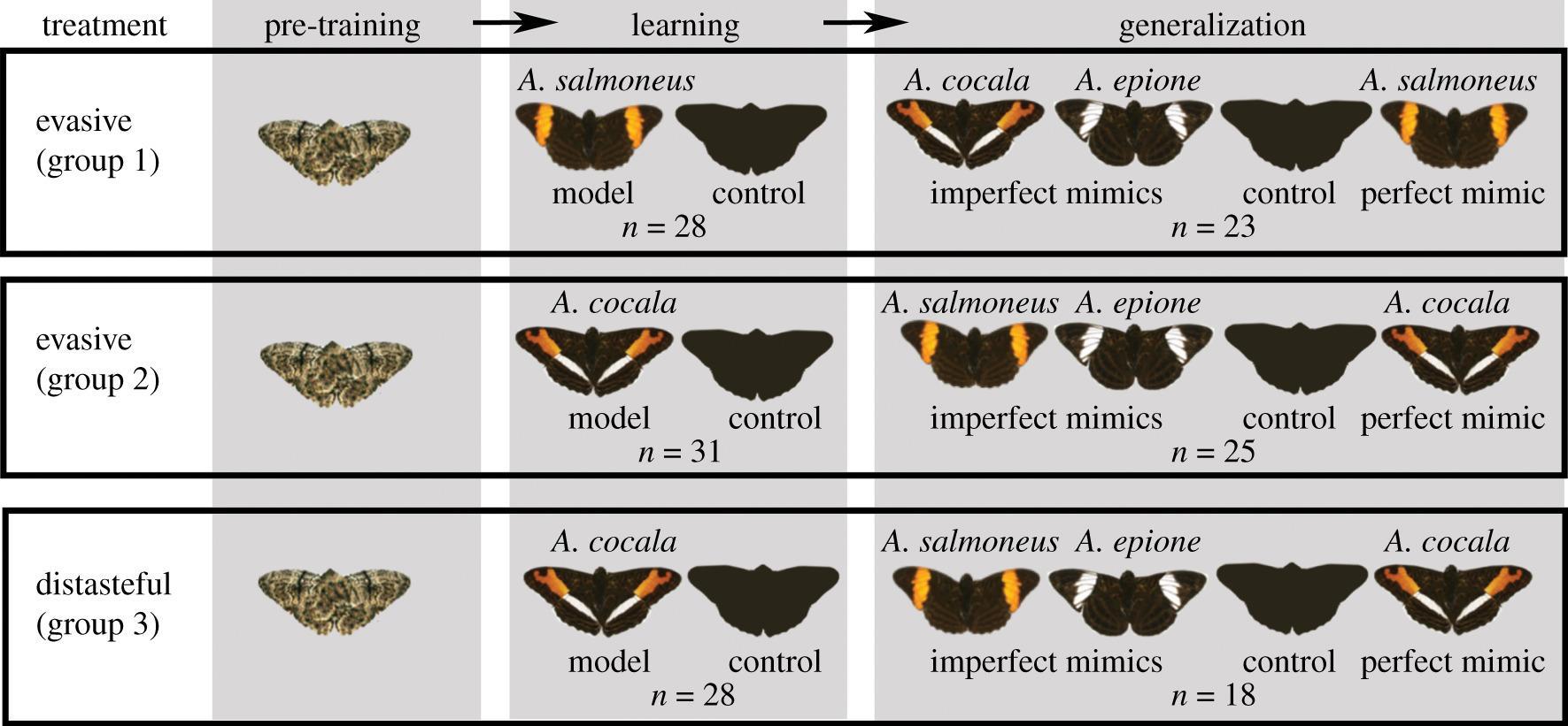 Лазоревки и бумажные бабочки помогли подтвердить гипотезу о мимикрии неуловимости