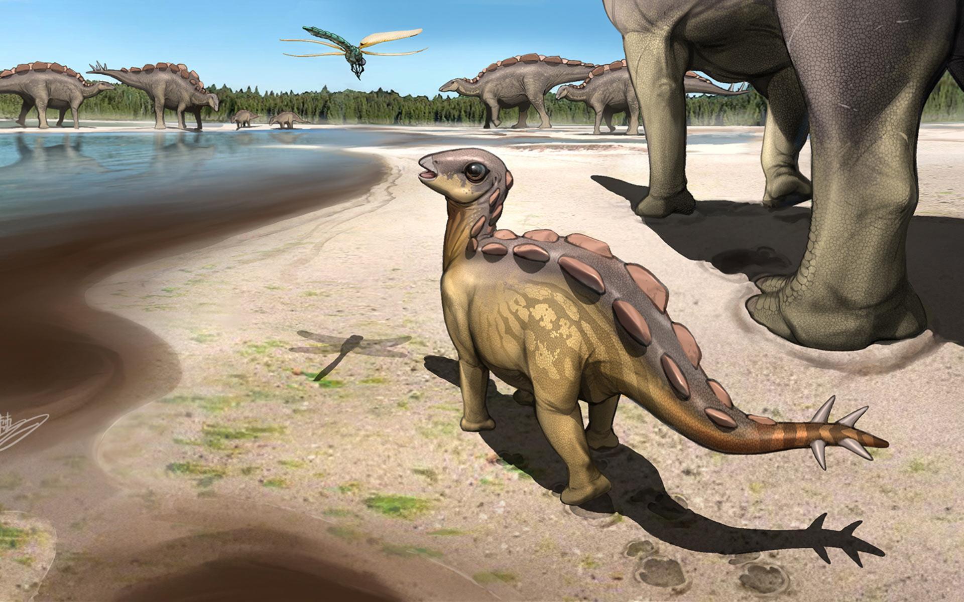 Ученые обнаружили следы миниатюрного стегозавра