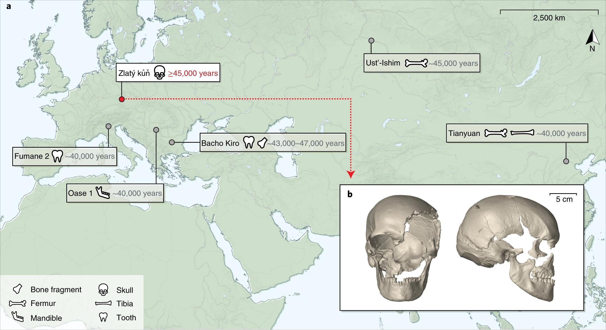 Реконструирован самый древний геном европейца