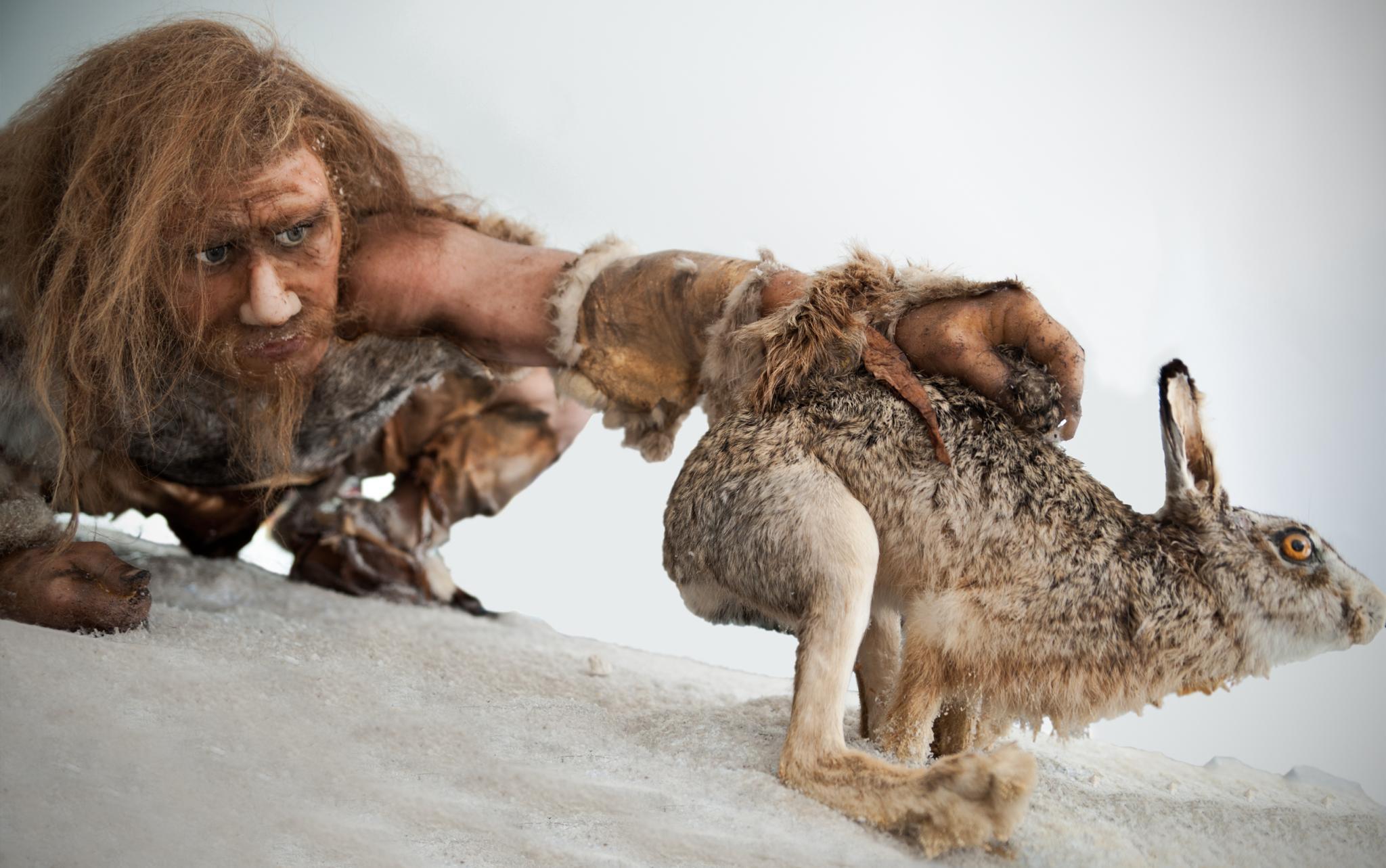 Меню наших предков могло почти полностью состоять из мяса