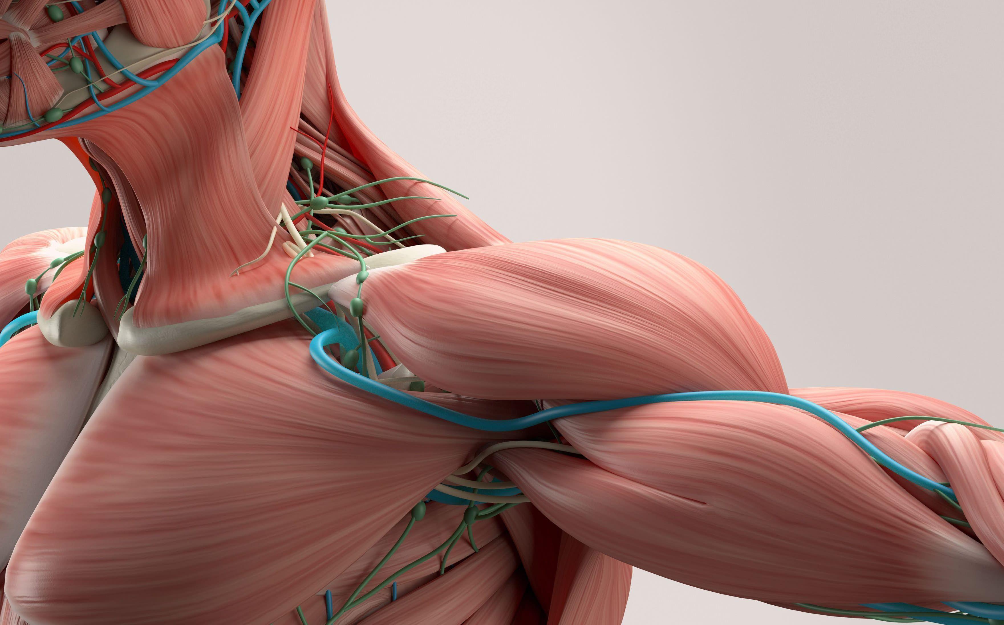 Низкий уровень глюкозы назвали помощником в восстановлении мышц