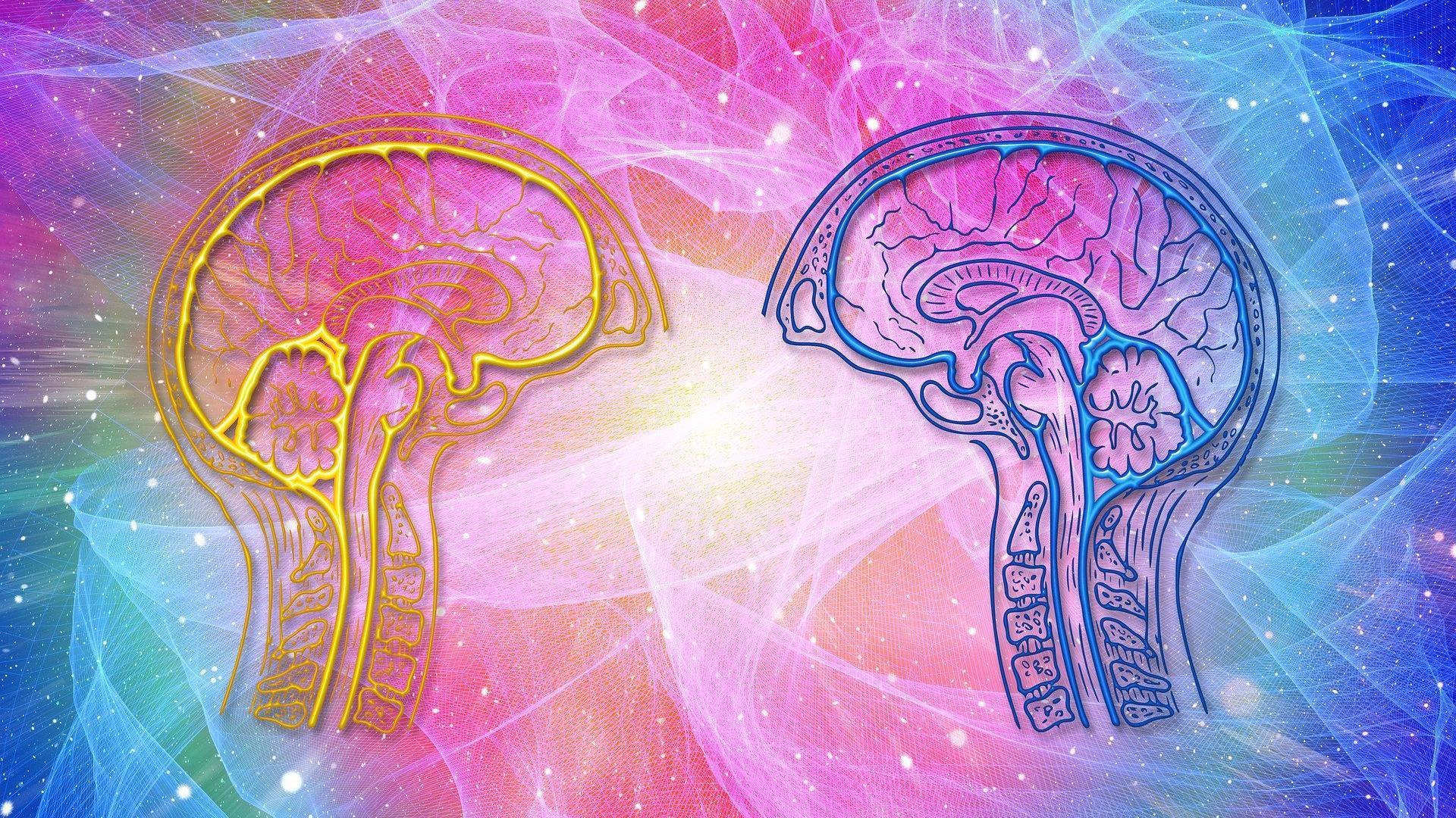 Мужской и женский мозг отличаются размером