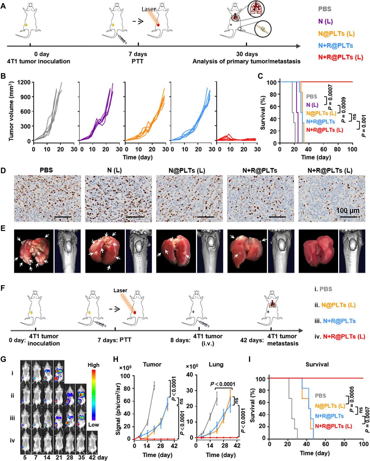 Тромбоциты вооружили фототермальной и иммунотерапией для борьбы с раком