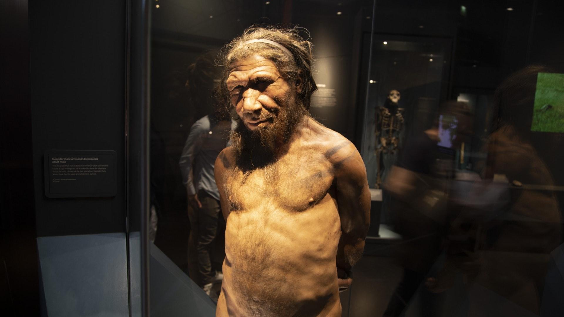 Евразийские неандертальцы были двух сортов