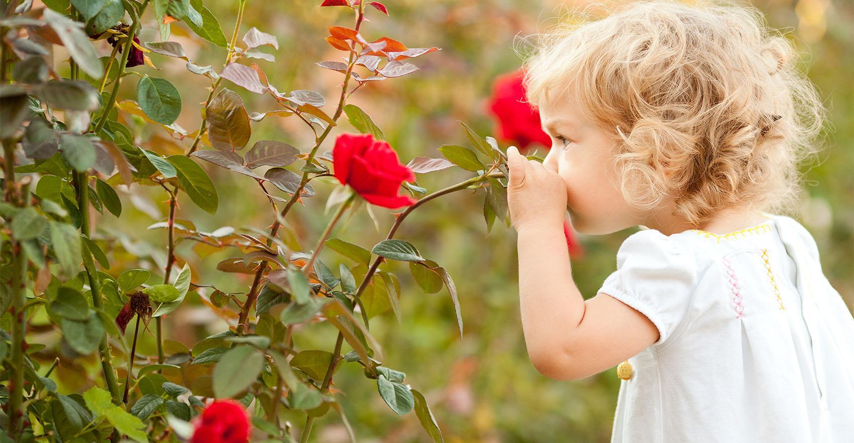 Отношение к запахам приобретается в раннем возрасте