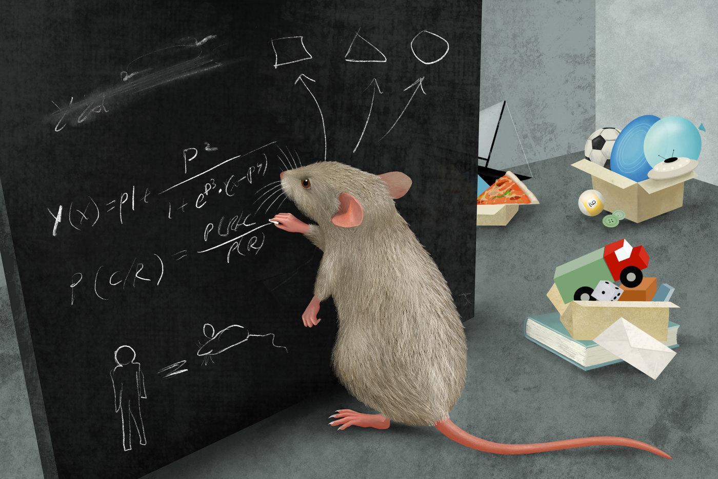 Мыши мыслят категориями