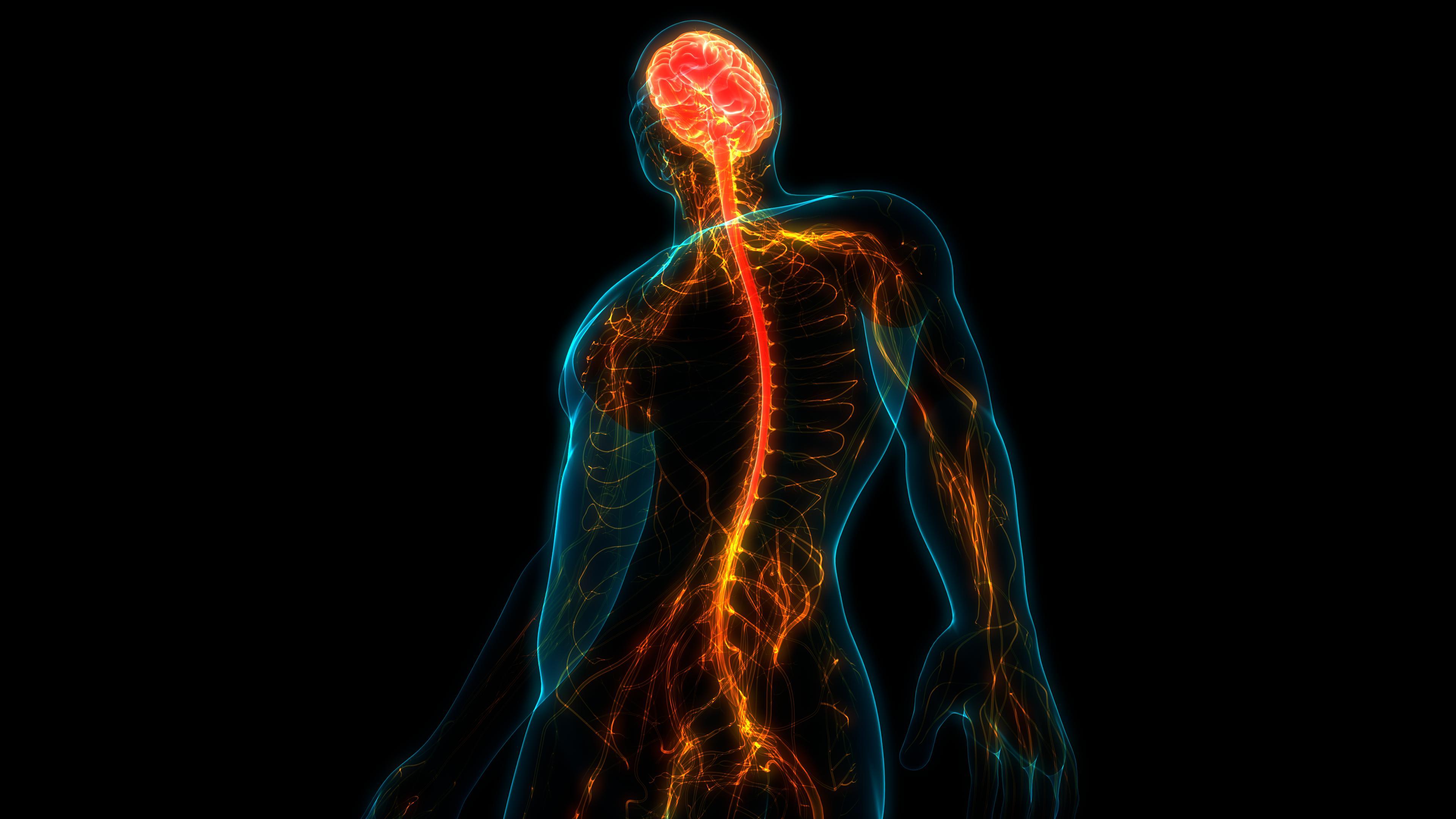 Введение витамина В1 после травмы спинного мозга помогло улучшить восстановление двигательной активности