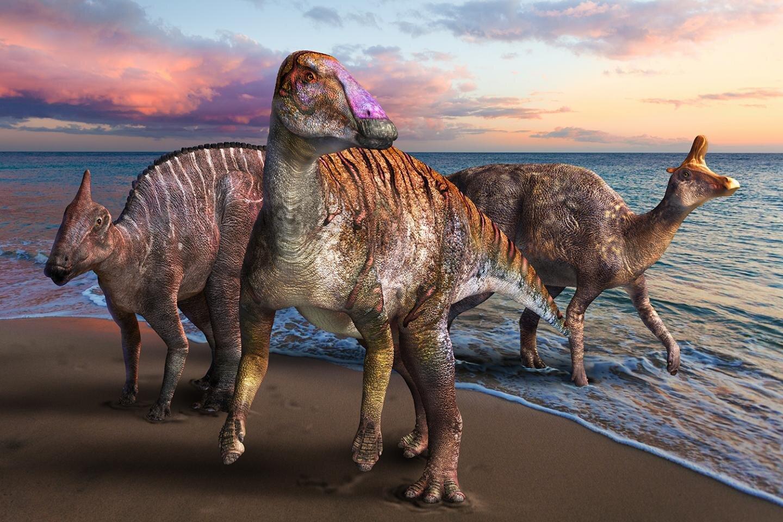 В Японии нашли новый вид утконосого динозавра