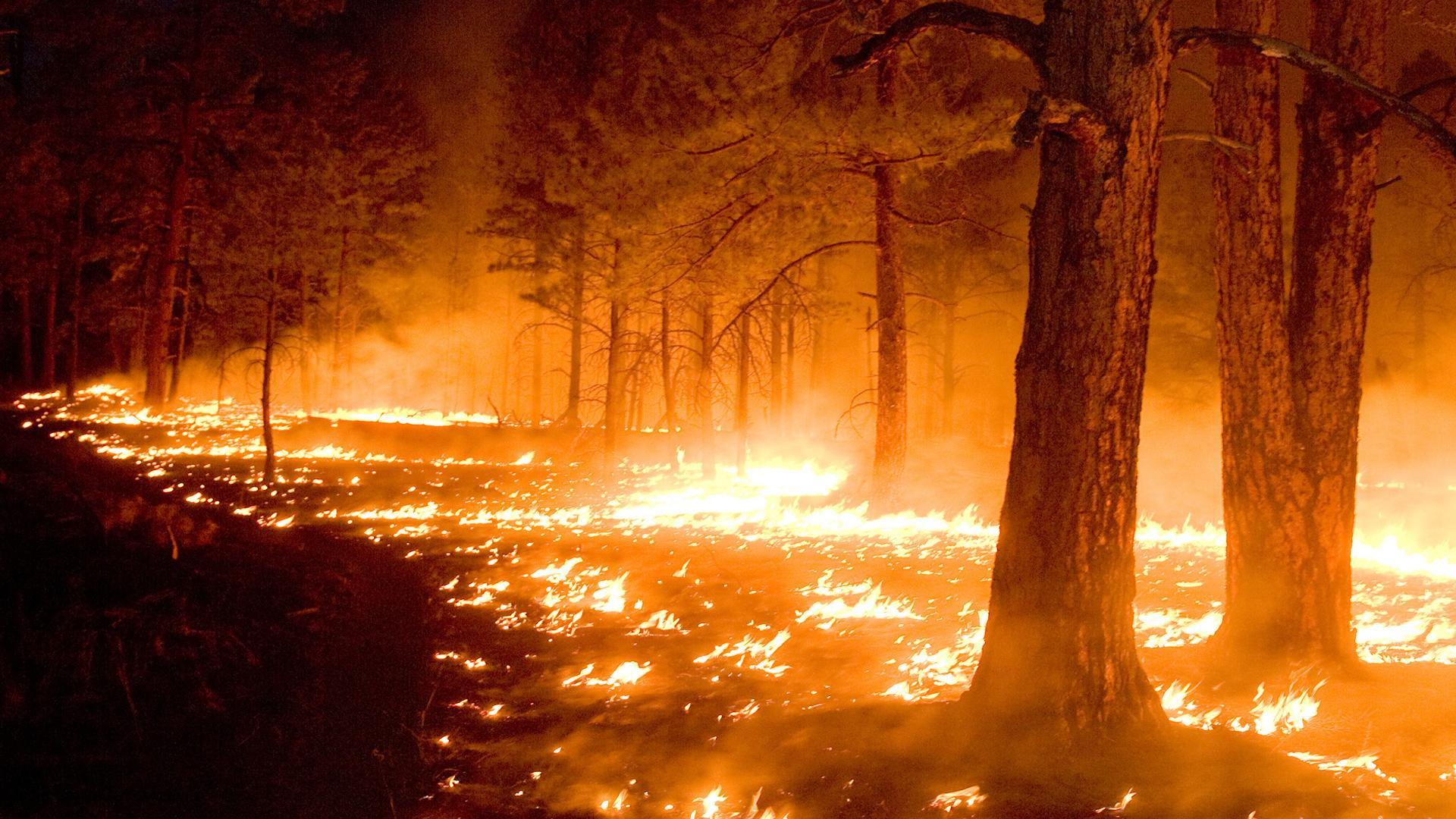 Зимующие пожары жгут северные леса