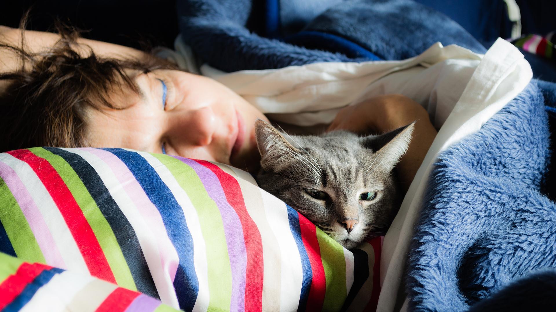 Собаки и кошки подхватили ковид в постели хозяев