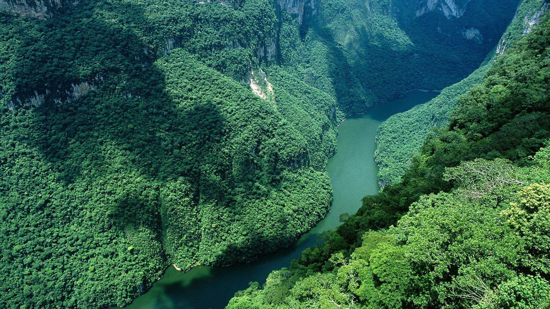 Леса Амазонии стали выделять больше углекислого газа, чем поглощать