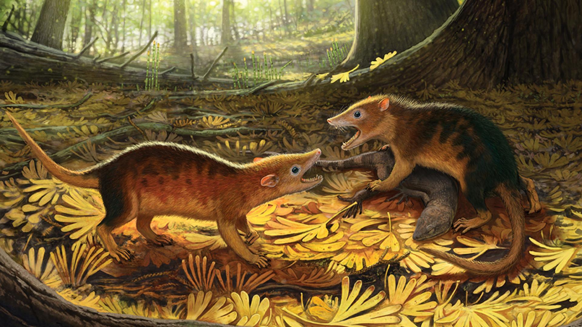 Численность млекопитающих контролировали их сородичи, а не динозавры