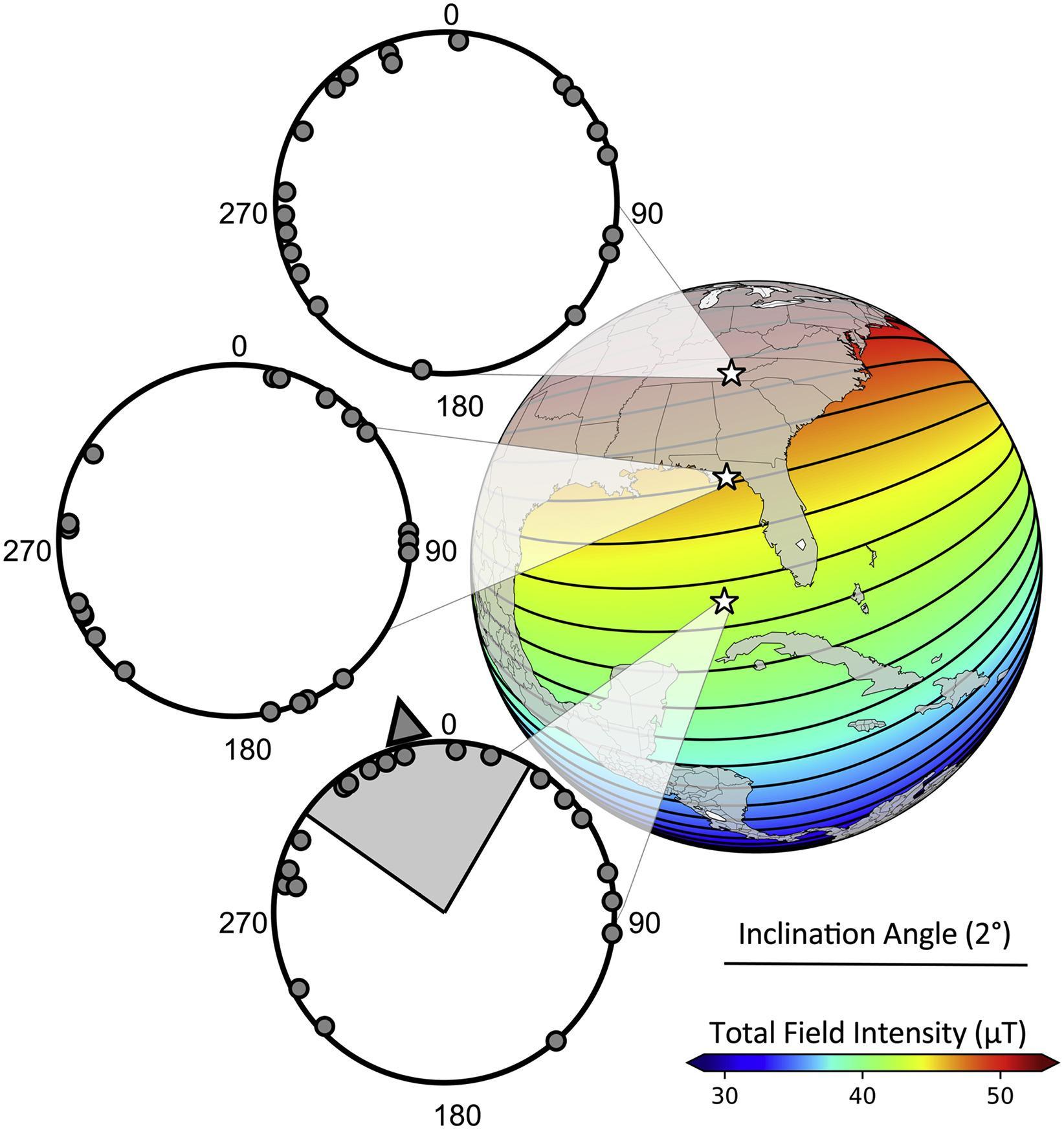 Акулы сориентировались по магнитной карте