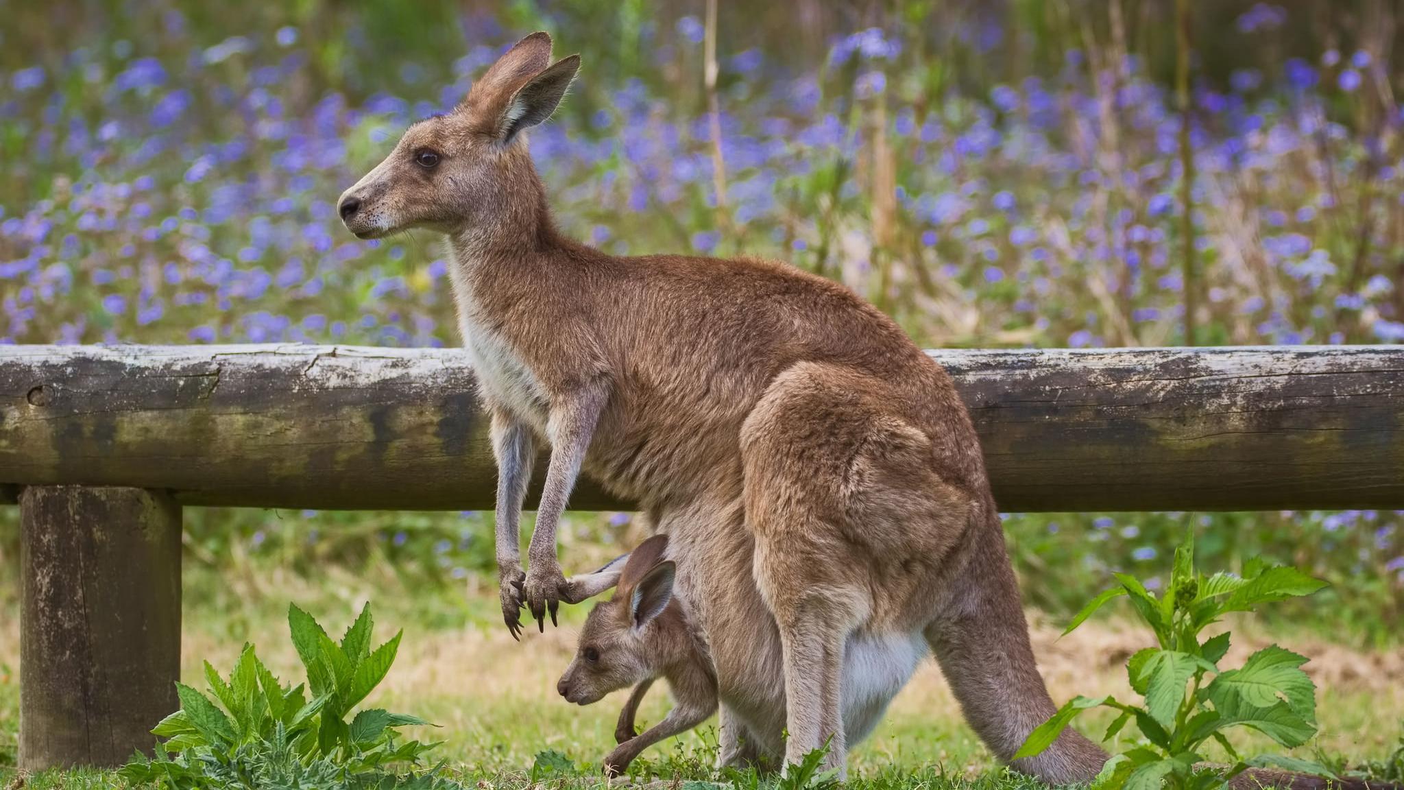 Метод кенгуру сразу после рождения повысило выживаемость младенцев