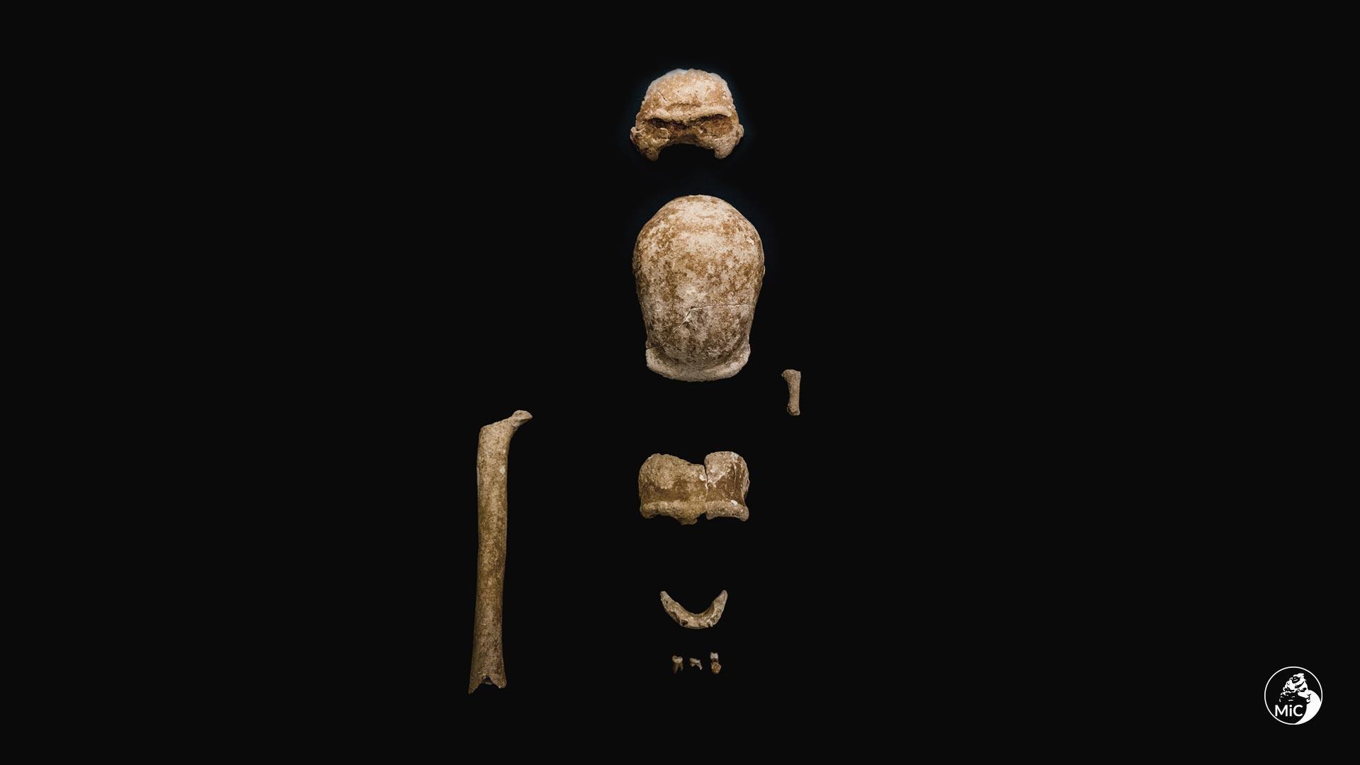 Недалеко от Рима нашли останки девяти съеденных пещерными гиенами неандертальцев