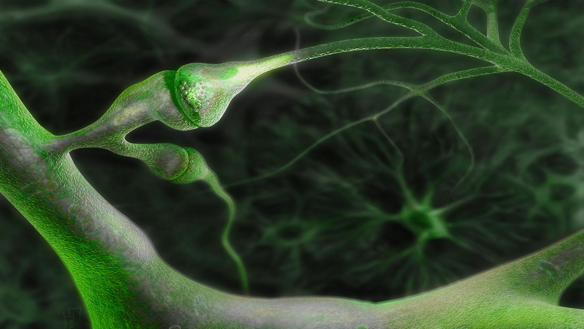Биологи обнаружили обратное движение сигнала между нейронами